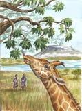 Giraffe, aborigines and Kilimangaro. In Tanzania Royalty Free Stock Image