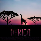Giraffe and acacia silhouette on sunset background. Africa illustration, giraffe and acacia silhouette on sunset background Stock Photo