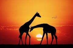 Giraffe in African landscape. Illustration of giraffe in African landscape at sunset Royalty Free Stock Photos