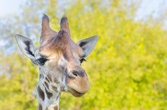 Giraffe, Afrika Lizenzfreie Stockfotos