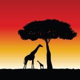 Giraffe art vector color silhouette Royalty Free Stock Image