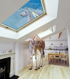 Giraffe in the attic window Royalty Free Stock Photography