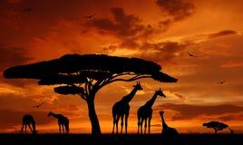 Giraffe au-dessus de lever de soleil photos stock