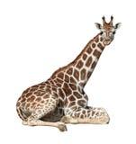 Giraffe auf dem Boden Stockfotografie
