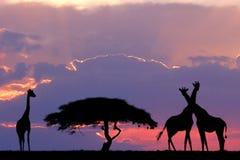 Giraffe auf Horizont lizenzfreie stockfotos