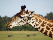 Giraffe auf Masai Mara Stockbild