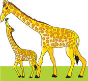 Giraffe and Baby Stock Photos