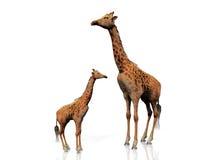 Giraffe and baby Stock Photography