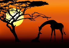Giraffe and baby silhouette. In sunset Royalty Free Stock Images