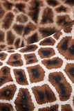Giraffe background texture. Zoo nature wildlife giraffe background texture Stock Photography