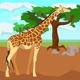 Giraffe on background trees, animals and nature Stock Photography