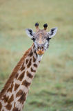 Giraffe with beautiful eyes. A giraffe with its long neck and beautiful eyes Royalty Free Stock Images