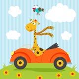 Giraffe and bird go by car Royalty Free Stock Image