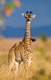 Giraffe with bird. Kenya. Tanzania. East Africa. An excellent illustration royalty free stock photos