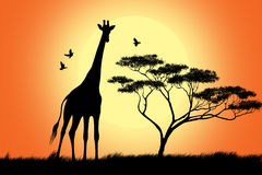 Giraffe black silhouette Stock Photography