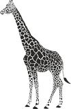 Giraffe black and white  Royalty Free Stock Photography
