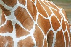 Giraffe body pattern royalty free stock image