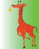 Giraffe. Stock Photo