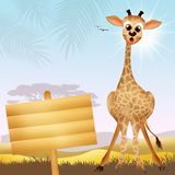 Giraffe cartoo. Illustration of giraffe in the savana Royalty Free Stock Images