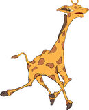 Giraffe. Cartoon Stock Photography