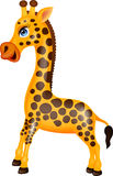Giraffe cartoon Stock Image