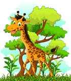 Giraffe cartoon on forest background Stock Photo