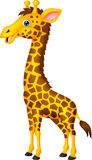 Giraffe cartoon Stock Photos