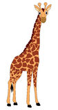 Giraffe. The giraffe cartoon illustrations on a white background stock illustration