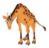 Giraffe cartoon vector illustration. The giraffe (Giraffa camelopardalis) is an African even-toed ungulate mammal, the tallest of all land-living animal species stock illustration