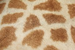 Giraffe - Close-up of real life hide pattern Royalty Free Stock Images