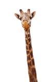 Giraffe Closeup Isolated - Happy Expression. Closeup giraffe with happy smiling expression. Head and neck isolated on white stock photo