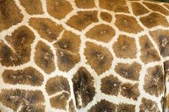 Giraffe coat Stock Photo