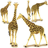 Giraffe collection Royalty Free Stock Images