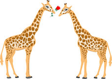 Giraffe couple. For valentine card Stock Images