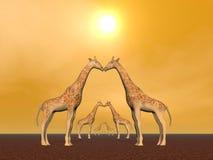 Giraffe couples Royalty Free Stock Image