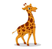Giraffe so cute Stock Photography