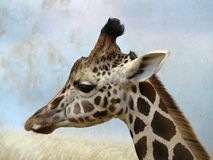 Giraffe dans le ZOO de Prague Photographie stock libre de droits
