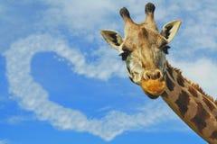 Giraffe de concept d'amour et nuage en forme de coeur   Photographie stock libre de droits