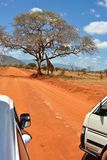 Giraffe de safari Image stock