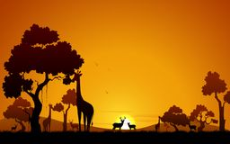Giraffe and Deer in Jungle Royalty Free Stock Photo