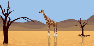 Giraffe in der Wüste stock abbildung
