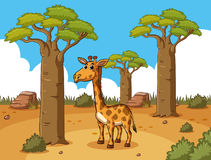 Giraffe in desert ground Royalty Free Stock Photography