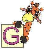 Giraffe, die eine Karte mit dem Buchstaben G hält Stockfoto