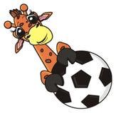 Giraffe, die einen Fußball versteckt Stockfotos