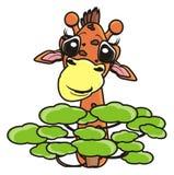 Giraffe, die hinter einem Baum sich versteckt Stockbild