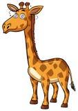 Giraffe with dizzy eyes Royalty Free Stock Image