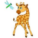 Giraffe and dragonfly Royalty Free Stock Image