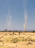 Giraffe e tempeste di polvere in amboseli, Kenia Fotografie Stock Libere da Diritti