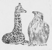 Giraffe and eagle sketch drawing  Stock Images