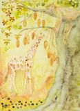 Giraffe eating from a baobab tree with sleeping lioness.